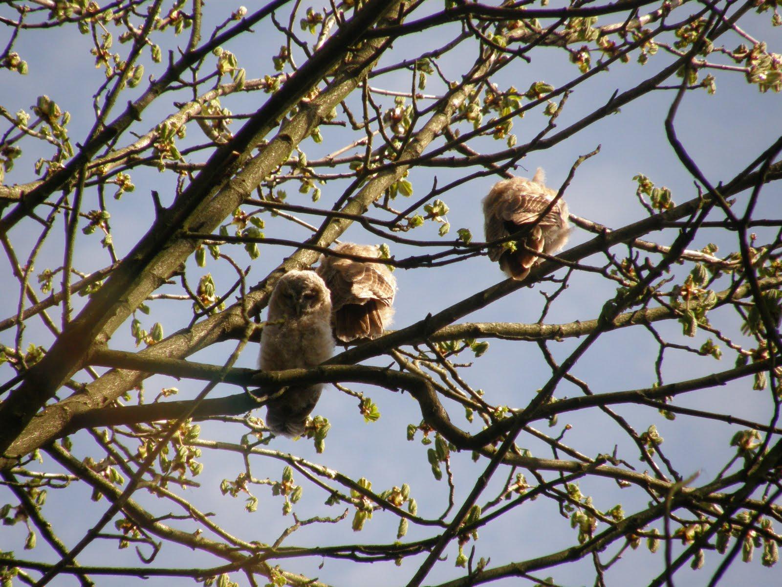 98% van de bomen vogelvrij?