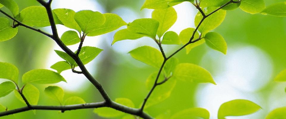Vooroverleg kap 270 bomen