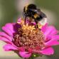 Bloemen en bijen Baljuwlaan