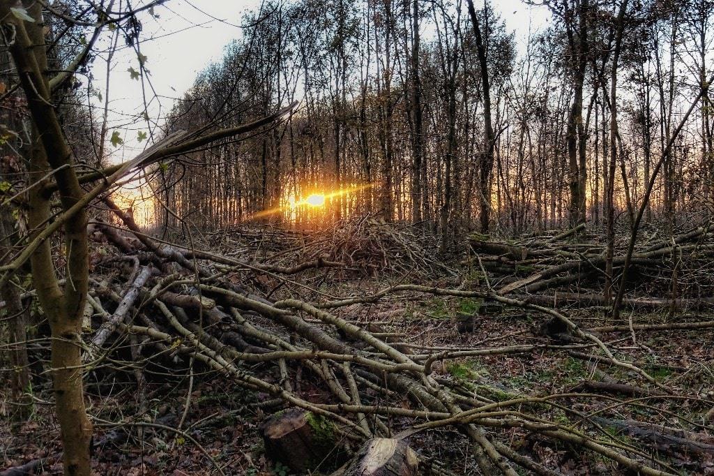 bomenkap Mallebos